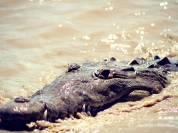 March 2015, Costa Rica. Copyright © Sherley J. Edinbarough (Surely, Sherley and/or SurelySherley), 2015.