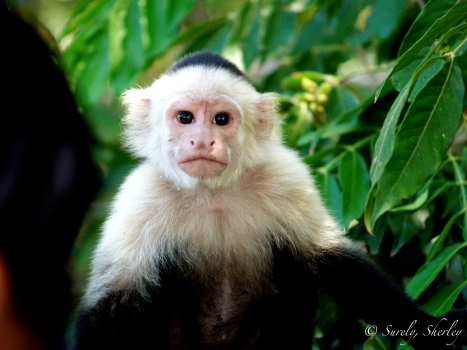 March 2015, Costa Rica. Having a staring contest with a curious monkey.
