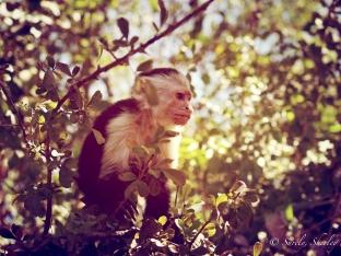 March 2015, Costa Rica. Copyright © Sherley J. Edinbarough (Surely, Sherley and/or SurelySherley), 2015. A meditating monkey. I think he's onto something!