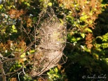 March 2015, Costa Rica. Copyright © Sherley J. Edinbarough (Surely, Sherley and/or SurelySherley), 2015. A thick weave of spiderwebs on the trees by the riverbank.